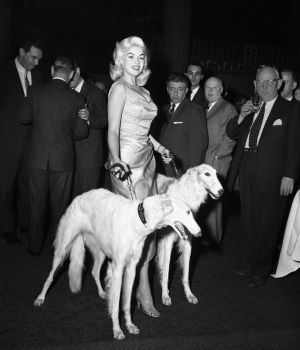 Jayne Mansfield with Seagrams Dogs by