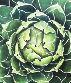 Victoria Agave by