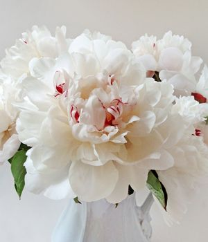 Peonies by