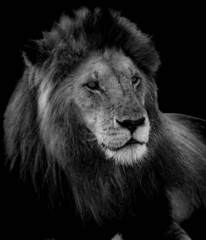 Profile of a King by