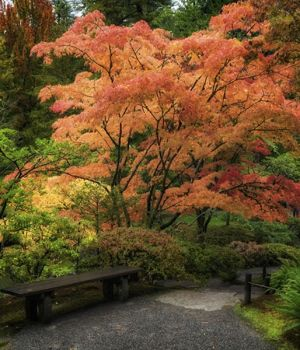 Japanese Gardens by