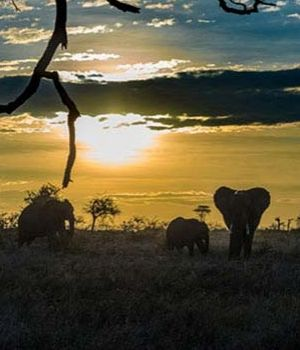 Elephant Family by