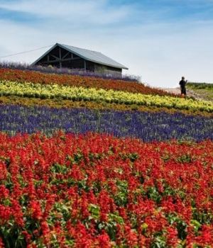 Flower Field by