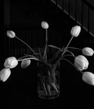 Tulips In Vase - Homage by