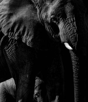Elephant and Baby by